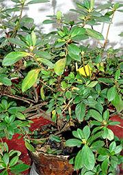 Img floracion