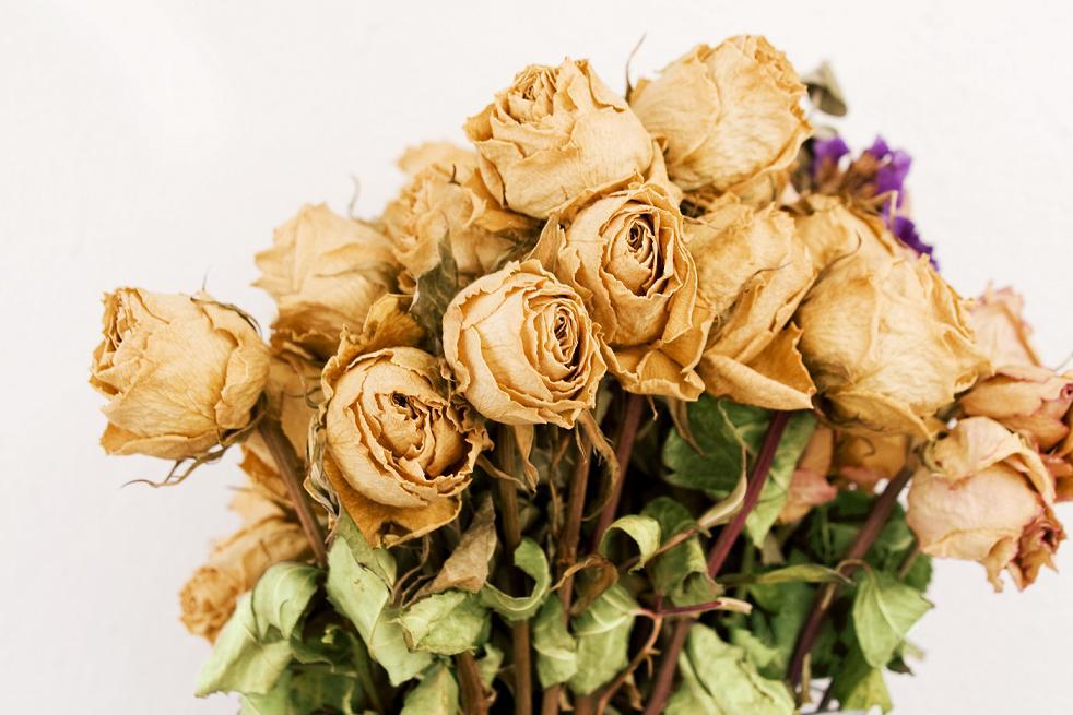 Img florseca