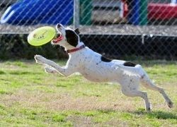 Img frisbee perro art
