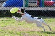 Img frisbee perro listado