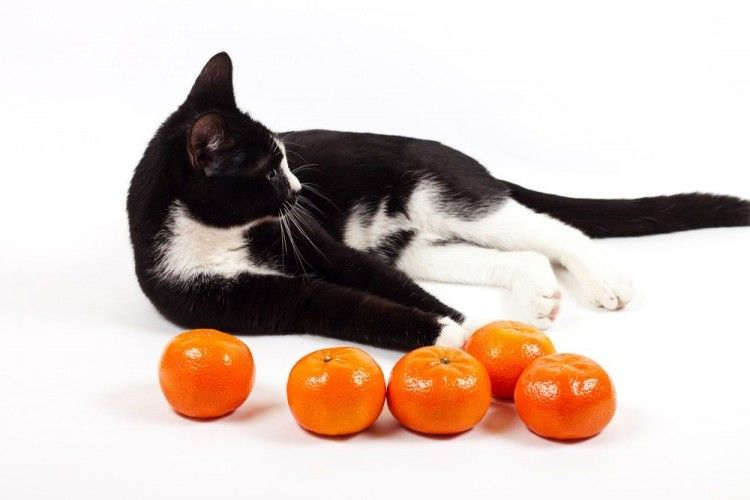 Img frutas peligrosas gatos art