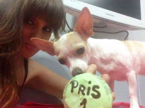 Img galletas perros personas art