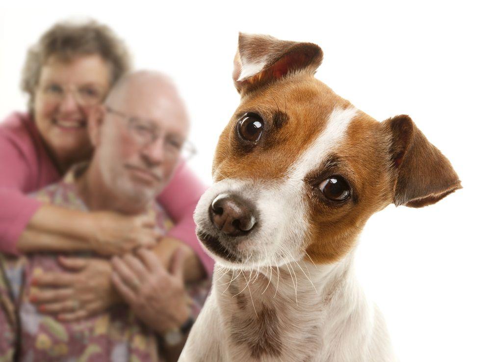 Img garrapatas perros humanos