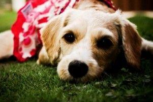 Img gastos perros ahorrar animales planificar consejos veterinarios ahorros art