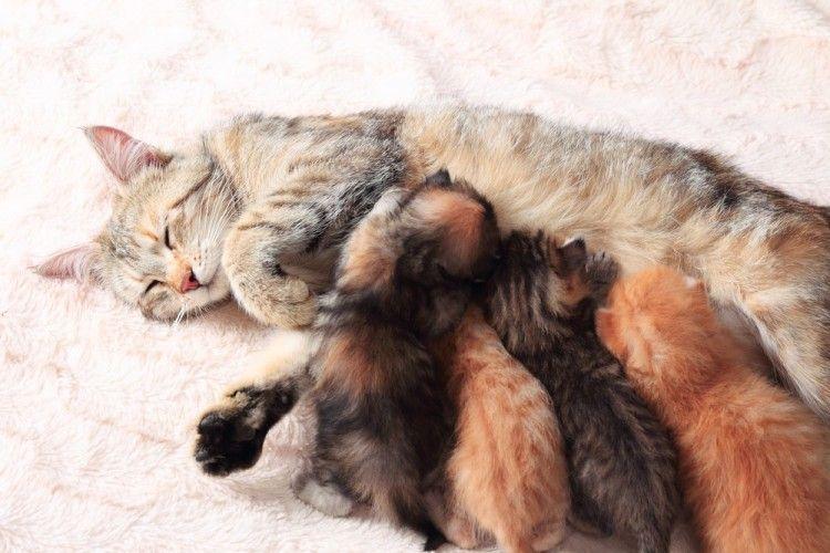 Img gatas dura embarazos art