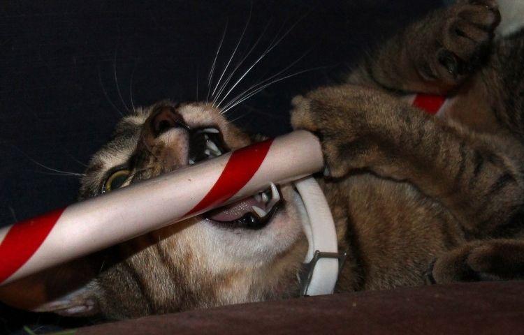 Img gato chocolate peligro