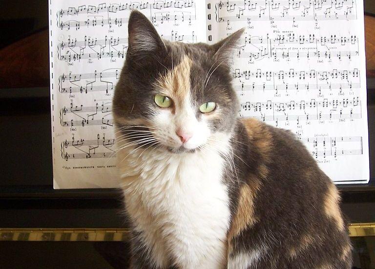 Img gato musica art