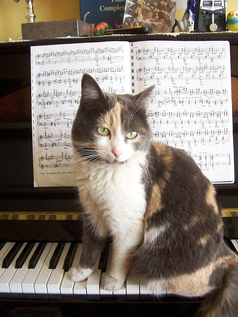 Img gato musica
