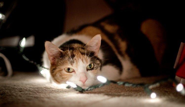 Img gato navidad seguras luces art