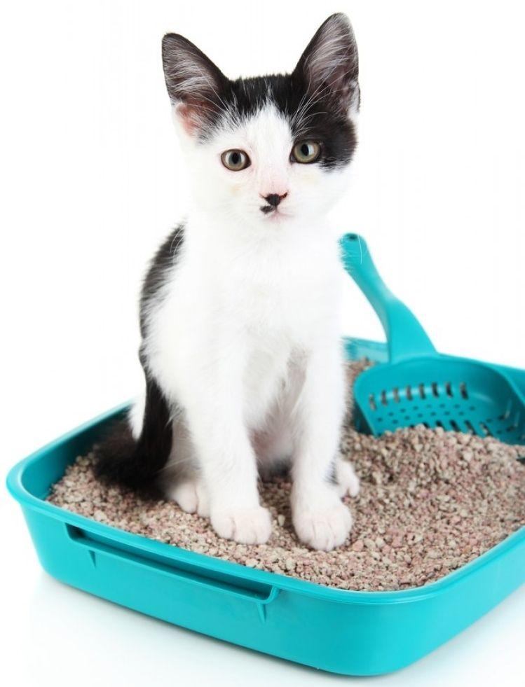 Img gato use caja arena trucos art