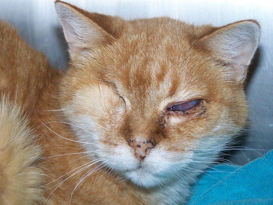 Img gatos adoptar discapacidadopt