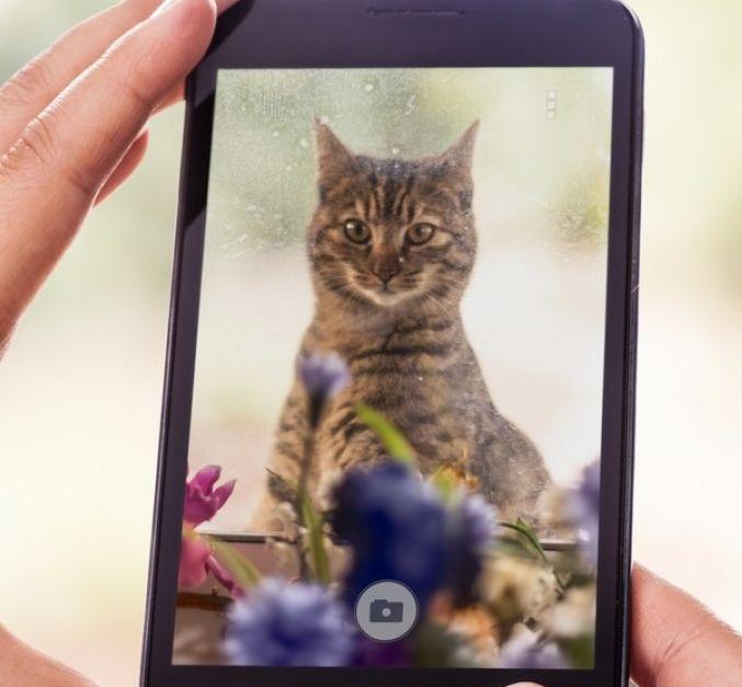Img gatos adoptar televisi en moviles art