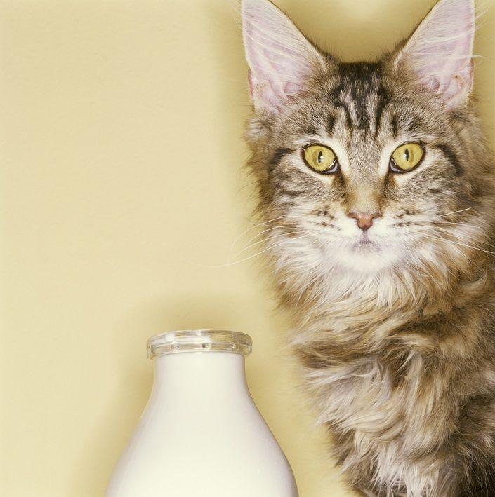Img gatos agua recetas