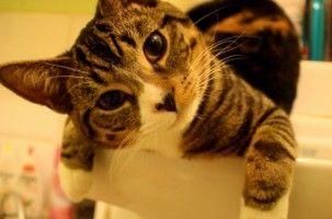 Img gatos aguas higienes salud limpios banos necesarios mascotas animales art