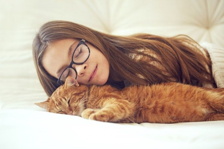 Img gatos alergia 2 art