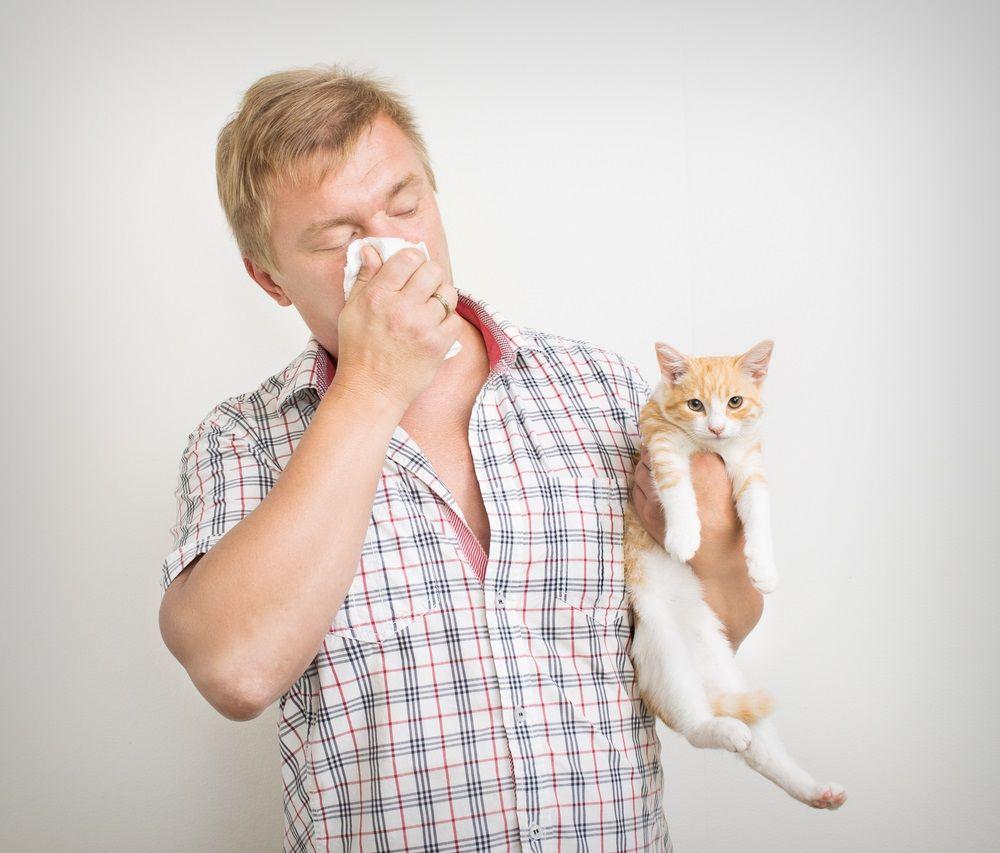 Img gatos alergia