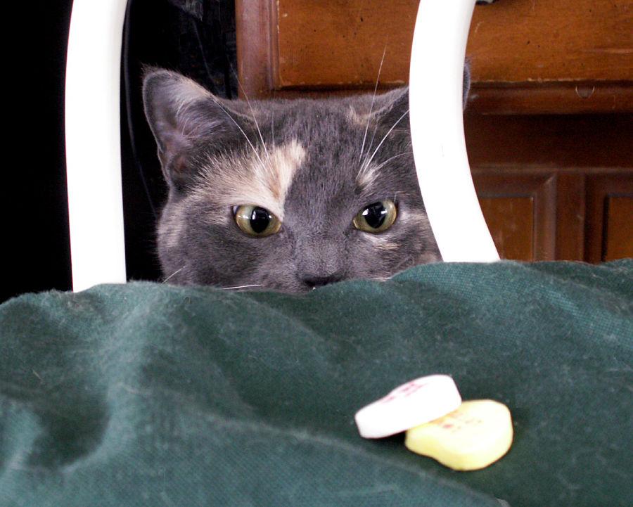 Img gatos alergias comidas