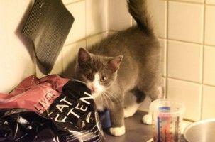 Img gatos alimentos alimentar cuantas veces comen gatos al dia latas piensos veterinarios mascotas art