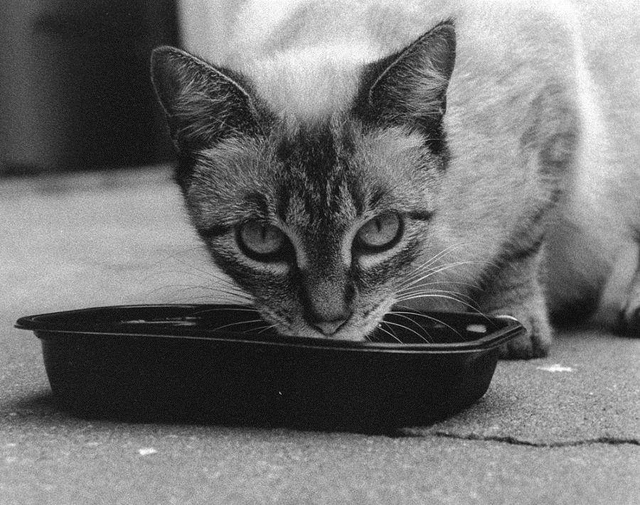 Img gatos alimentos enfermosopt