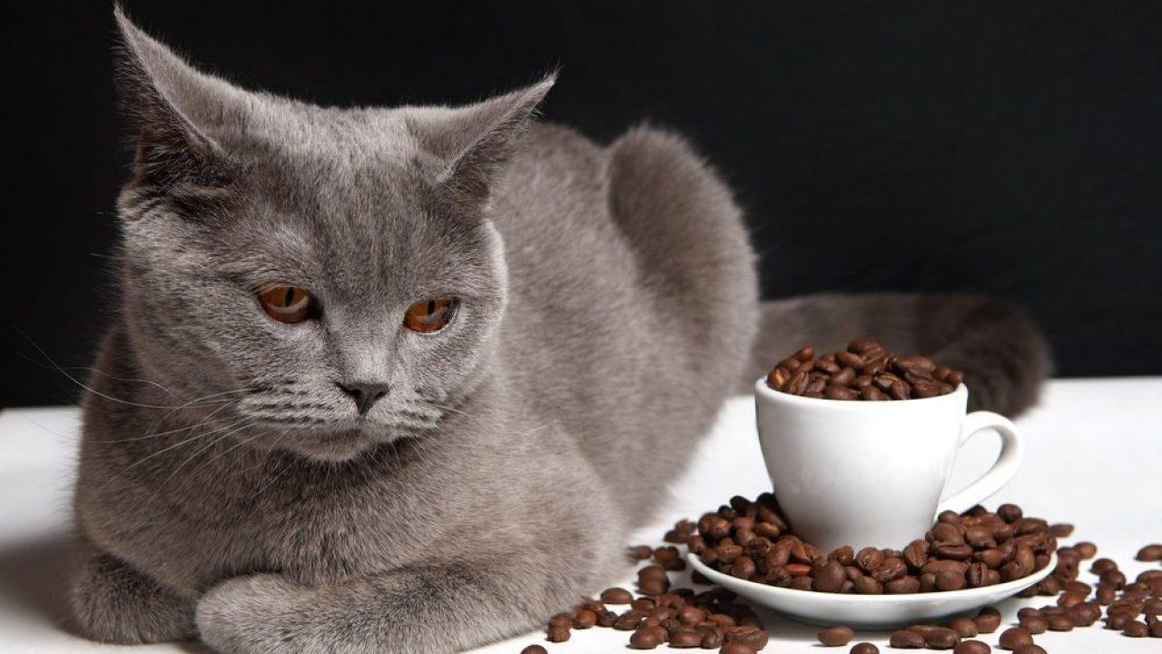 8 Alimentos Peligrosos Para Los Gatos Consumer