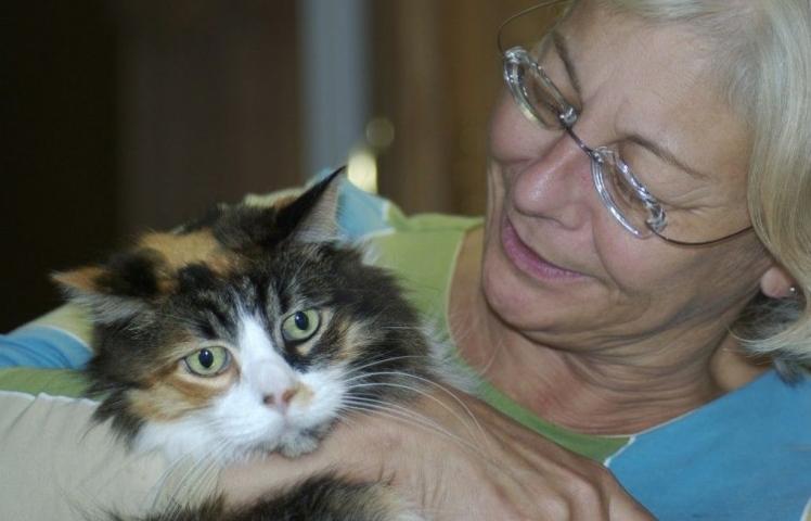 Img gatos alzheimer demencia cuidados art