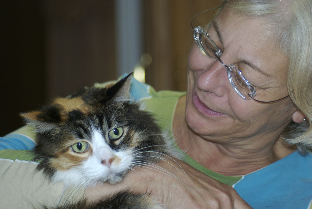 Img gatos alzheimer demencia