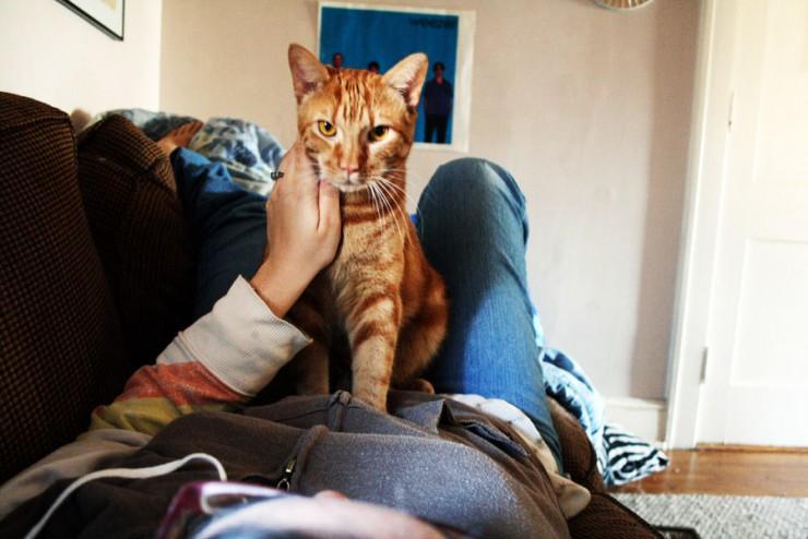 Img gatos amasan porque art