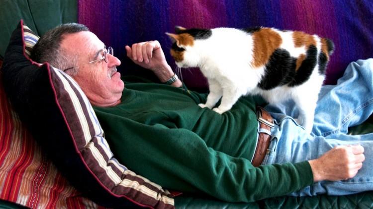 Img gatos amor hormona art