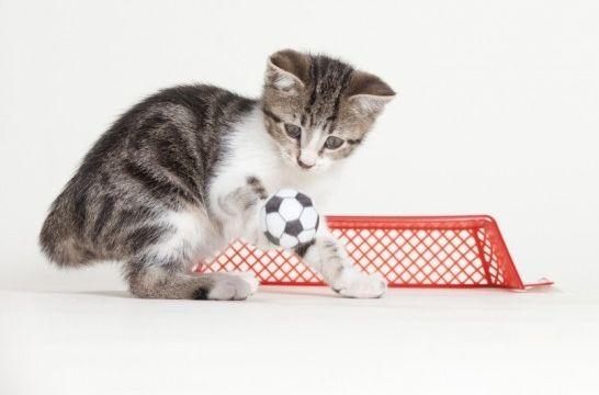 Img gatos aprender listg