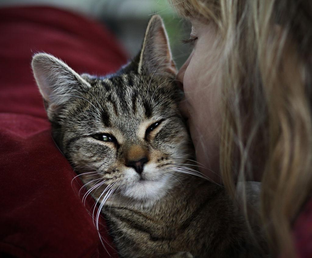 Img gatos asma