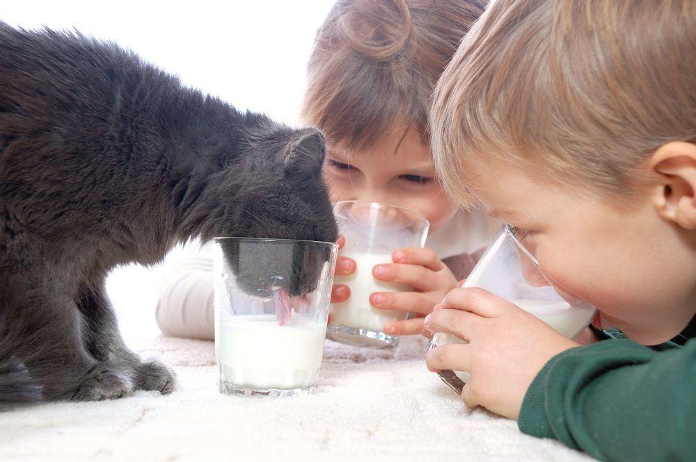 Img gatos beben leche