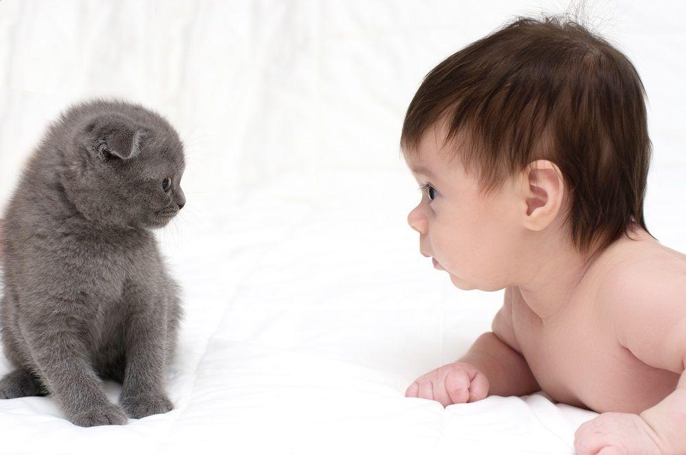 img_gatos bebes amigos 1