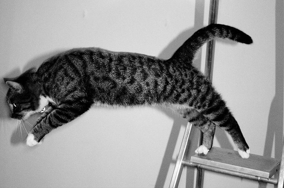 Img gatos caen patas pies