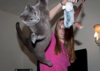 Img gatos caidas pies art