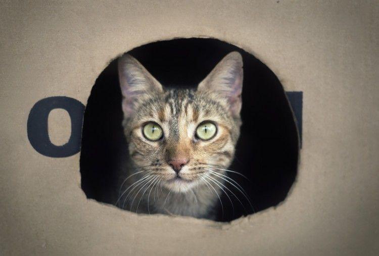 Img gatos cajas amor art