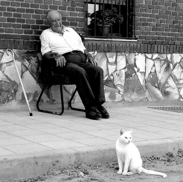 Img gatos callejeros hombre art