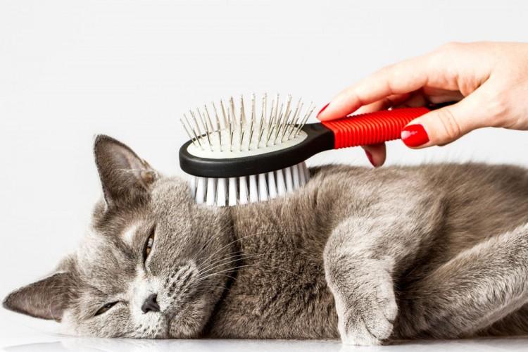 Img gatos calor consejos mimos 2 art