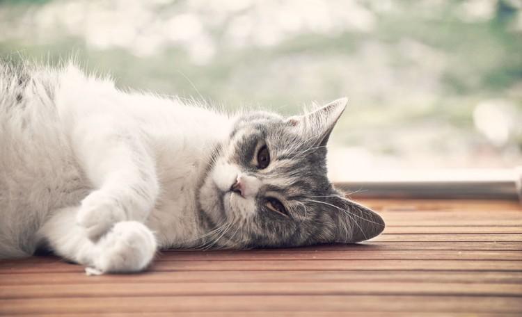 Img gatos calor consejos mimos art