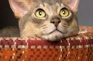 img_gatos camas hechas casa caseras listado
