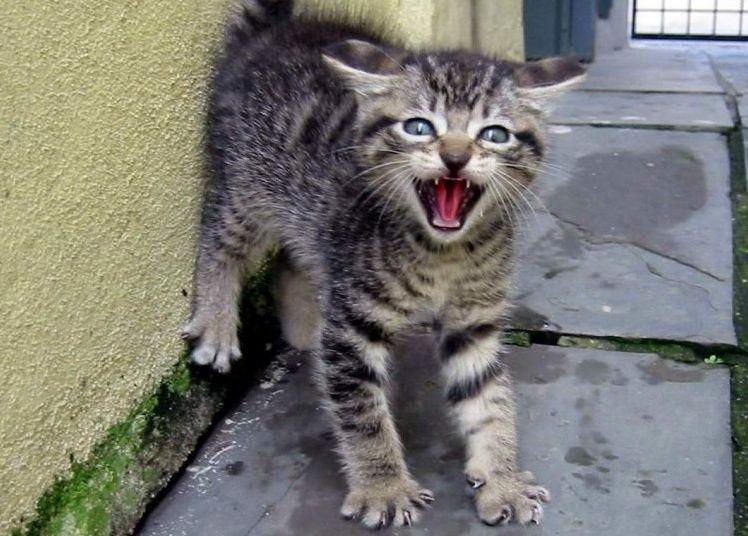 Img gatos cara miedo interpretar