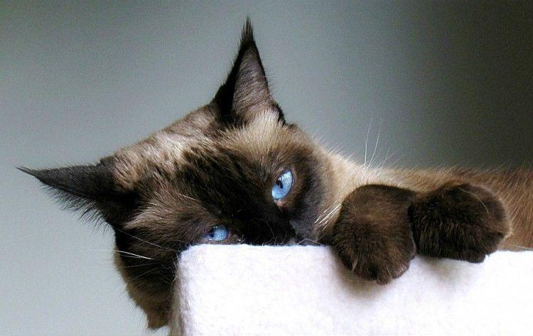 Qué me dice el gato con esa cara? | Consumer