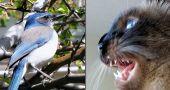 Img gatos castanean ciencia