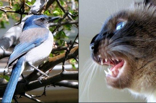 Img gatos castanean ciencia listag