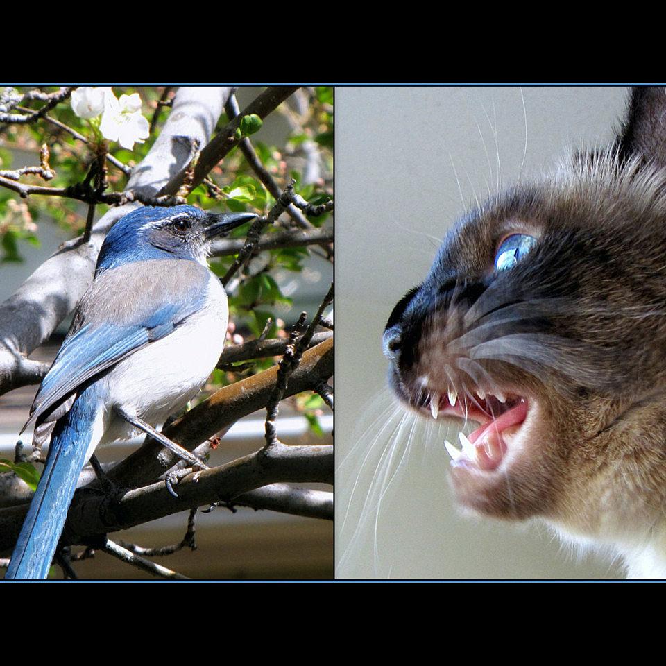 img_gatos castanean ciencia