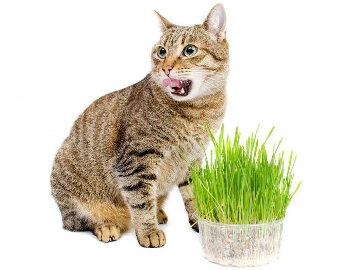 Img gatos catnip hierbas art