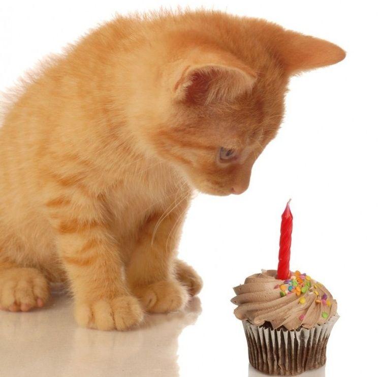 Img gatos chocolate peligros alimentos art
