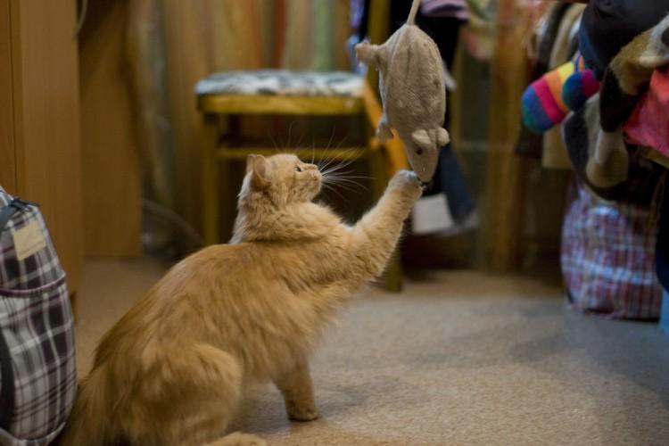 Img gatos comer caza