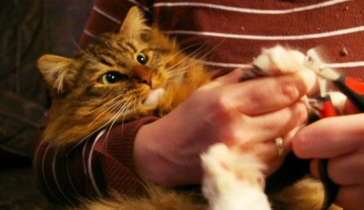 Img gatos cortar unas apertura