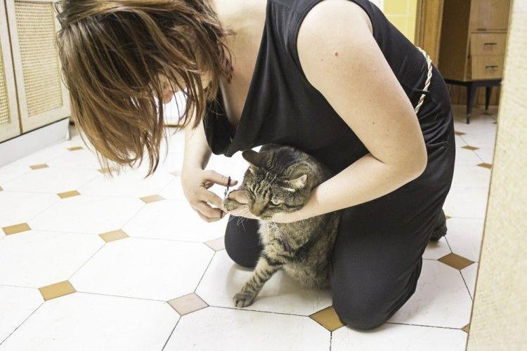 Img gatos cortar zarpas trucos art
