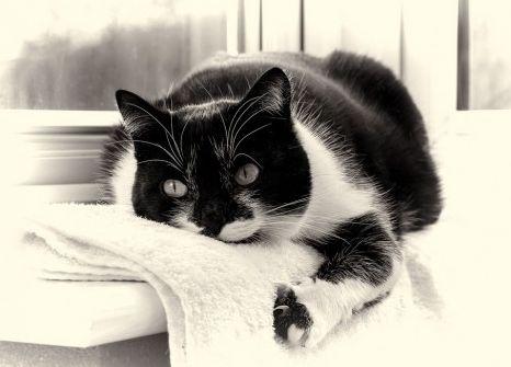 Img gatos diabetes alimentar art